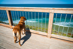 Dog watching ocean Royalty Free Stock Photography