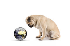 Dog watching our world royalty free stock photo