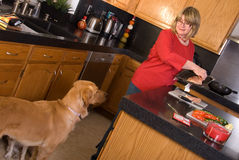 Dog watching owner cook. Royalty Free Stock Photo