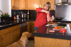 Dog watching owner cook. Royalty Free Stock Images