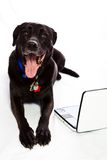 Dog watching portable tv. Mixed breed dog watching portable tv on white background Stock Image