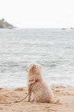 Dog watching the sea Stock Image