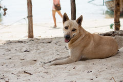 Dog watching the summer vacation on the beach Royalty Free Stock Photos