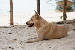 Dog watching the summer vacation on the beach Royalty Free Stock Photo