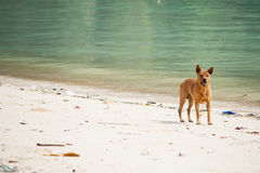 Dog watching the summer vacation on the beach Stock Image