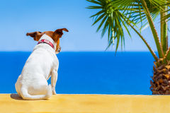Dog watching Royalty Free Stock Photos