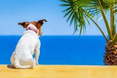 Dog watching Royalty Free Stock Photos
