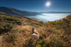 Dog watching into the sun at dawn Royalty Free Stock Image