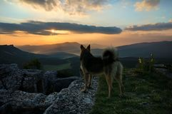 The dog watching sunrise on the Crimean Mangup-Kale Cave town royalty free stock photo