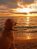 Dog watching sunset Stock Images