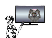 Dog watching television Royalty Free Stock Images