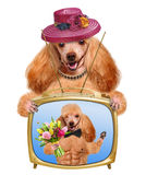Dog watching television Stock Photos