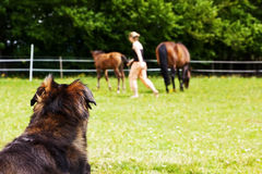 Dog is watching woman and horses Royalty Free Stock Photos