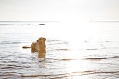 Dog on the water Royalty Free Stock Photo
