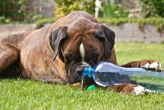 Dog with water Stock Photos