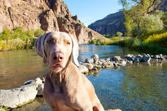 Dog and Water stock photography