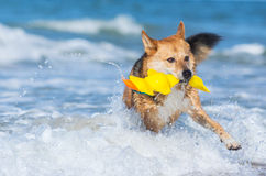 Dog in the water on the beach Stock Image