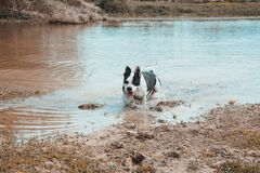 Dog in water. stock image