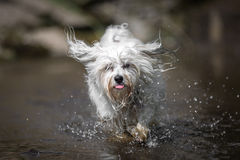 Dog in the water Royalty Free Stock Photography