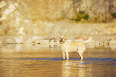 Dog in the water Stock Photo