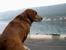 Dog on the waterfront. Dog sitting on the seafront royalty free stock photography