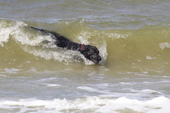 Dog in wave stock photo