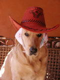 Dog wear a hat Royalty Free Stock Photography