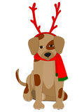 Dog wearing Antlers and Scarf Stock Photo