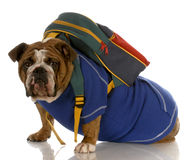 Dog wearing backpack Royalty Free Stock Images