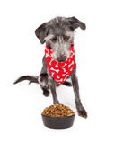 Dog Wearing Bandana Looking Down At Food Bowl Royalty Free Stock Photography