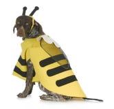 Dog wearing bee costume Stock Photos