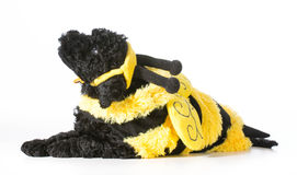 Dog wearing bee costume Stock Photos