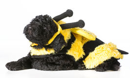 Dog wearing bee costume Royalty Free Stock Photo
