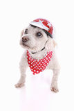 Dog wearing bike helmet and bandana Royalty Free Stock Images