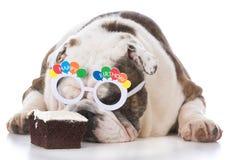 Dog wearing birthday glasses sniffing cake Stock Photos