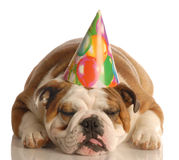 Dog wearing birthday hat Royalty Free Stock Images