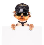A dog wearing a cap and glasses with banner Royalty Free Stock Photo