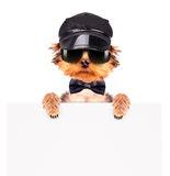 A dog wearing a cap and glasses with banner Royalty Free Stock Images