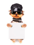 A dog wearing a cap and glasses with banner Stock Image