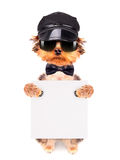 A dog wearing a cap and glasses with banner Royalty Free Stock Photos