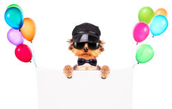 A dog wearing a cap and glasses with banner Stock Photography