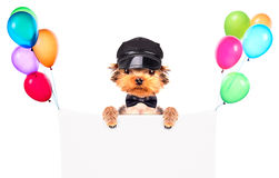A dog wearing a cap and glasses with banner Stock Photo