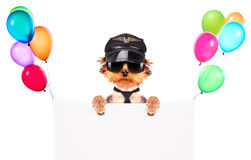 A dog wearing a cap and glasses with banner Royalty Free Stock Image