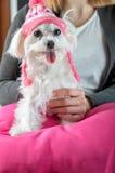 Dog wearing a cap Royalty Free Stock Photos