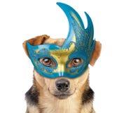 Dog wearing carnival mask. Isolated stock image