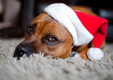 Dog wearing Christmas hat Stock Image