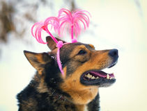 Dog wearing Christmas headband Royalty Free Stock Photos