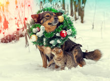 Dog wearing christmas wreath and santa hat with little kitten Royalty Free Stock Photos