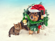 Dog wearing christmas wreath and santa hat with little kitten Royalty Free Stock Images