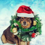 Dog wearing christmas wreath and Santa hat Stock Image
